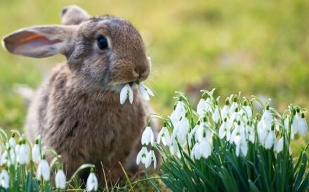 promociones de primavera